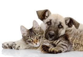 Husdjur-hund-katt-boende-åre